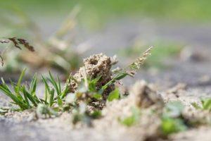 anthill in a garden