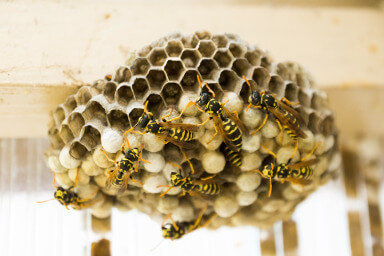 Wasp nest treatment in Birmingham