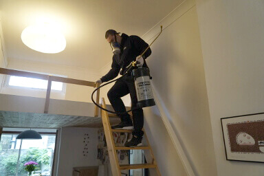 Property pest inspection in Birmingham